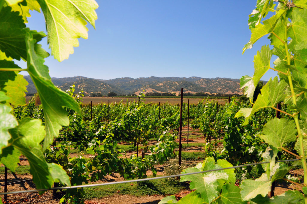 1-yolo-county-vineyards