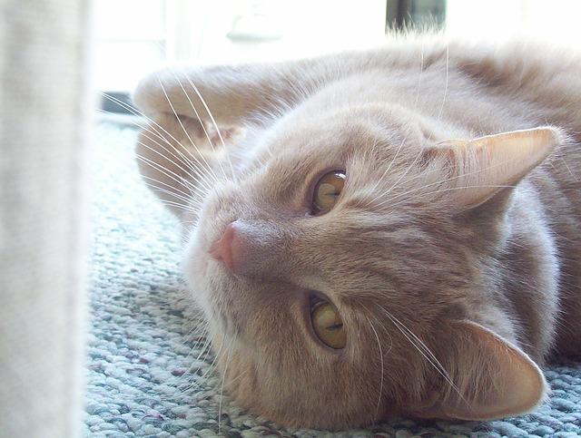 cat-20712_640