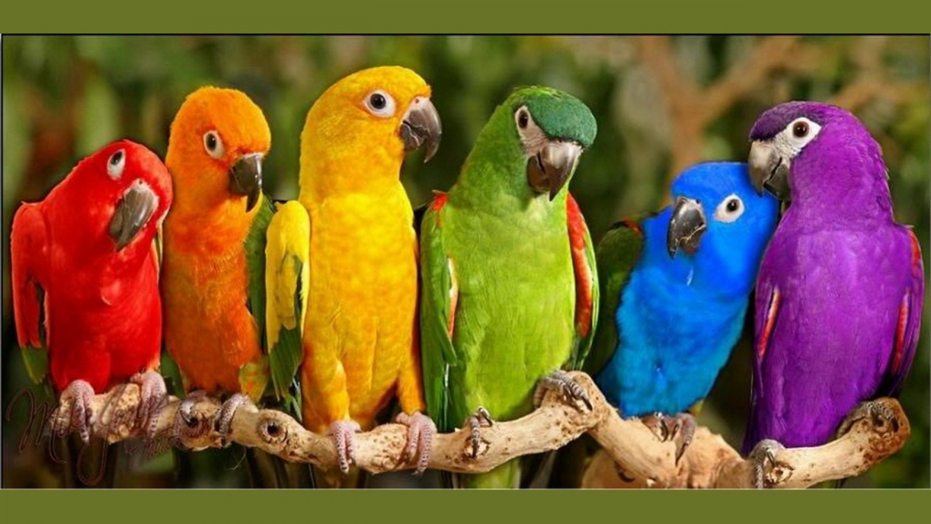 Pictures-Of-Birds-HD-
