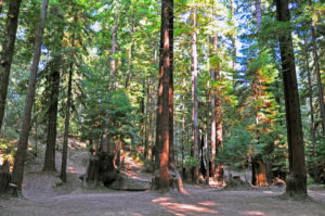 1. Cathedral grove